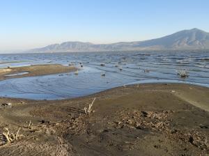 new serpentine shoreline