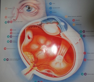 Artist's rendering of my retinal disfunction.