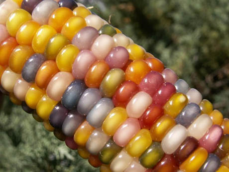 glass-gem-corn-2-460