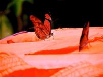 More Open Wings