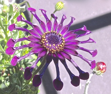 Open Petals