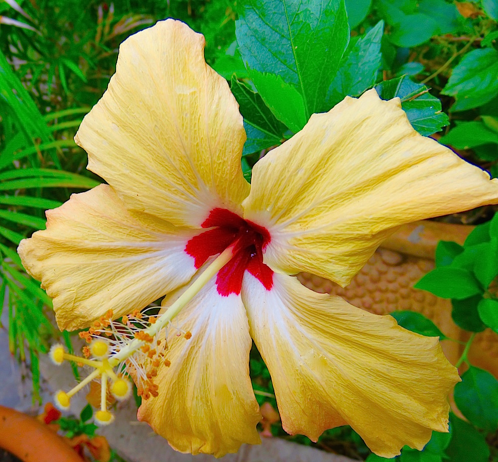 Obelisco flower of the day lifelessons a blog by judy dykstra brown izmirmasajfo