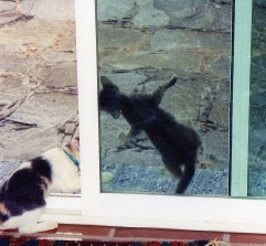 Lulu teaching Annie how to climb the screen door.