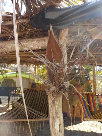 Palm fruiting pod sconces