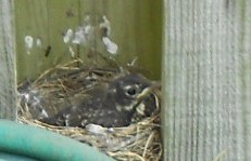 Last out of the nest