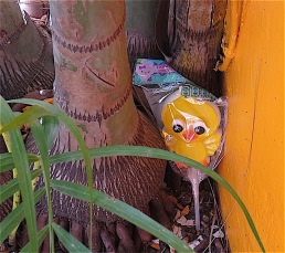 This gap between the tree trunk and wall was just wide enough to hide Yoli's big chick sucker for her Easter Egg hunt.