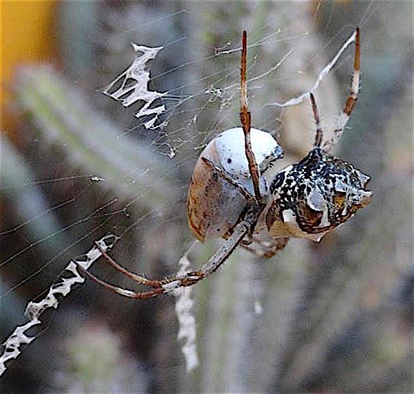 remi-spider2-e1442909307631