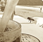 bee at beach
