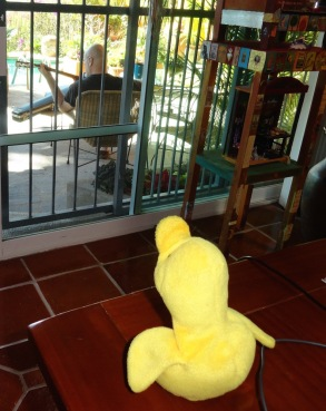 When Big Duck retreated to find a little solitude to practice his guitar, Little Duck had a front row seat--to Big Duck's back.