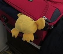 When he woke up, it was to a flurry of packing. Seems the househumans are taking off for Minnesota tomorrow. Determined not to be left behind, Little Duck decided to smuggle himself into Judy's bag, but misjudged the size of his tummy after all those treats and got stuck.