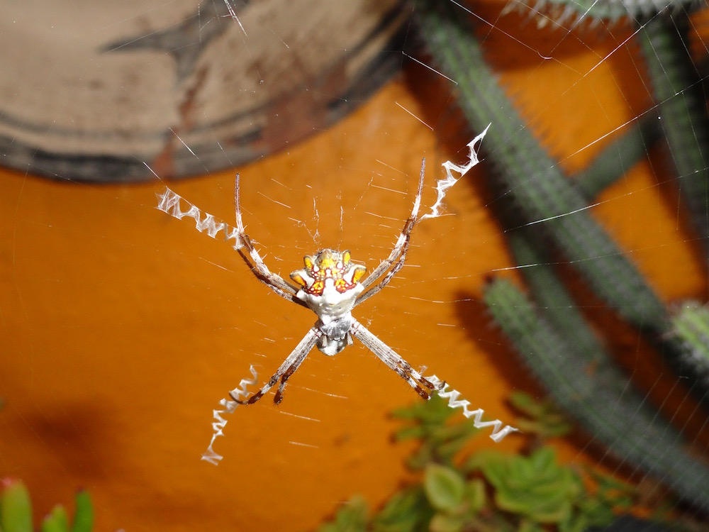 orb spider judith beveridge essay My essay on australian nature poetry is section two my own collection of poetry  and  judith beveridge's 'orb spider' is a particularly unforgettable piece of.