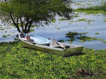 Boats were nestled in among the water hyacinth.