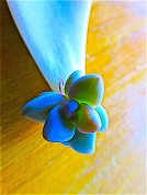 """I found this perfect little succulent """"flower"""" lying on the brick sidewalk"""