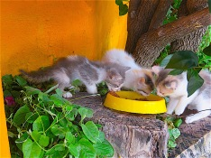 First day I found them, feeding the starving kittens.