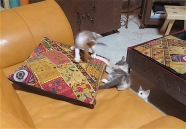 Fran and Ollie have already devised their game, but looks like Roo is considering joining in.
