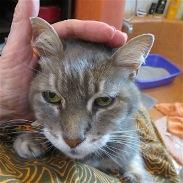 Annie getting her rubs.