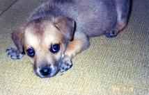 Frida Puppy