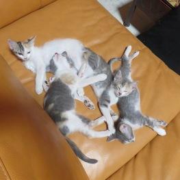 Kitten pileup at approx 3 months