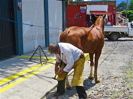 Peek at the man shoeing the horse.