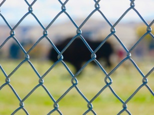 Peek in at the buffalo