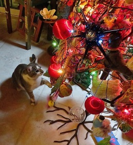 And, company gone, the kittens get to inspect the tree for the first time.