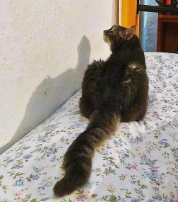 I wait here for my mistress, gazing at the wall, But when I go to look for her, she isn't here at all.