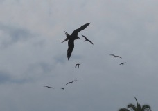 The ballets executed by these swooping and soaring birds was exquisite.