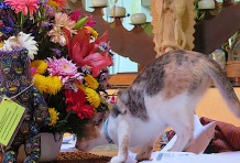 I love catching Frannie smelling the flowers. She can't resist.