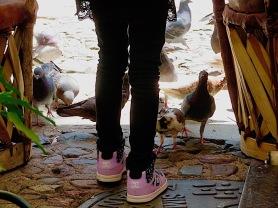 Pigeons everywhere...You'll see.
