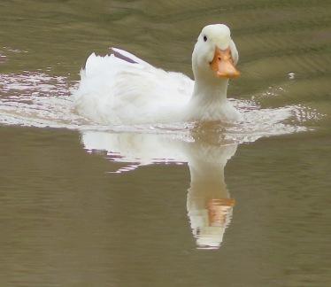 Sorry, Duckie.