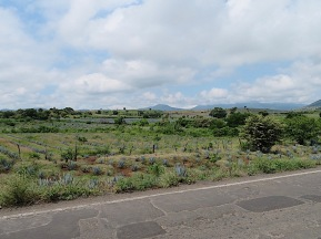 Extinct volcanos dotted the scenery on the way to Amatitan andTequila.