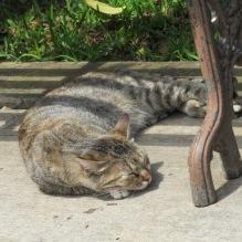 Every establishment needs a resident cat.