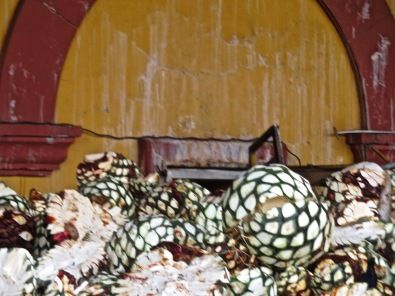 Agave bundles are put into the kilns to steam.