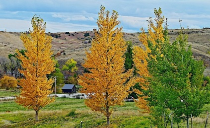 It was beautiful fall in Sheridan Wyoming when I arrived on Oct. 1