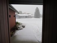 and a different sort of precipitation covered the front walk. No tall grass to be weighted down!