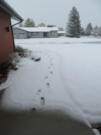 The front walk was transformed, and my socks got wet walking to the car!