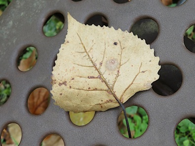 and, finally, this leaf seemingly surrounded by jewels