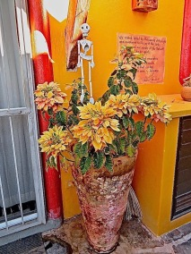 Whe I returned from two months at the beach, I was amazed to find poinsettias blooming even more profusely than they had bloomed in december. Notice the ring on the top of the bodega to the right of the flowers?