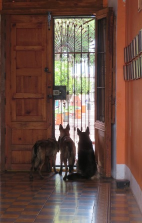 These resident dogs seem to be planning their escape, should that door ever be opened!