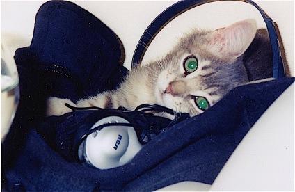 Annie headphones