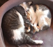 The cats were all nestled, sound in their beds,