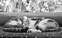 Two Sleepyheads