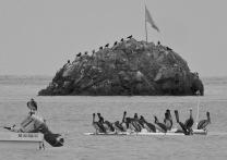 Flock on Rock