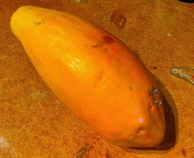 On the way up to the house, I picked this perfectly ripe papaya from the tree next to the kitchen window.