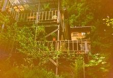 Boulder Creek House:Trees 2