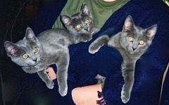 Bear as a kitten with his sisters.