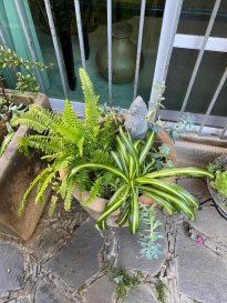 and the front planters,