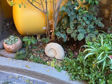 moved the ammonite fossil from the wall ledge to the ground, where it was safer from nudgings by cats,