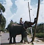 Sri Lanka with Dee.