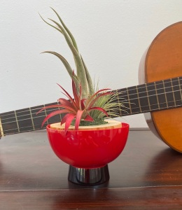 The bromeliads looked perfect in the Oriental lacquer cup in front of the guitar,